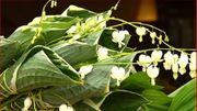 Montage floral - un bouquet horizontal
