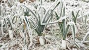 Le froid arrive.  Comment protéger son jardin ?
