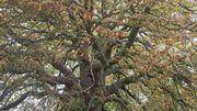 A vos votes namurois pour défendre l'arbre de l'année