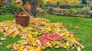 Préparez maintenant et facilement votre jardin pour le printemps !