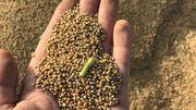 Graines bio ? Graines traitées ?  Graines enrobées ? Que choisir ?