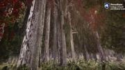 Se promener dans une forêt virtuelle pour prendre conscience du changement climatique