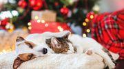 Les calendriers de l'avent pour nos animaux de compagnie