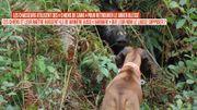 L'utilisation des chiens de sang: méthode barbare ou utile ?
