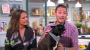 Comment éviter les coups de chaud à votre chien cet été ?