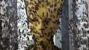 Découvrez la sculpture naturelle de Nefertiti créée par 60.000 abeilles