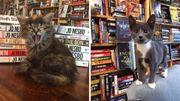 Une librairie accueille des chatons prêts à l'adoption... Une idée qui ronronne bien !