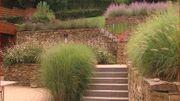 Un jardin médaille d'or à Dave