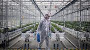 La firme canadienne Tilray, pionnière du cannabis thérapeutique, nous a ouvert les portes de son usine au Portugal