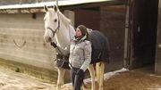 Lorsque les chevaux sont tondus, il est préférable de les couvrir.