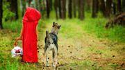 Des scientifiques remontent aux origines du petit chaperon rouge