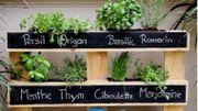 Jardin aromatique suspendu en palette : vos épices à portée de main