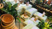 Rebondir face à la fermeture: le truc de Wondergreen, boutique de plantes