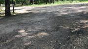 """Arbres arrachés dans le parc de la """"Colline aux moineaux"""" pour les installations de la Fan Zone"""