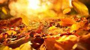 Réaliser son terreau de feuilles mortes... Mode d'emploi