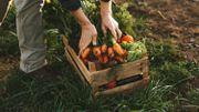 Tout savoir sur les ... carottes !