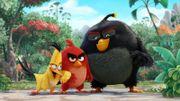"""Un premier trailer pour le film """"Angry Birds"""""""