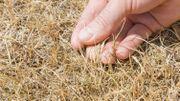 En septembre, la sécheresse continue en Belgique
