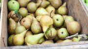 Un pesticide illégal retrouvé dans des poires de producteurs belges