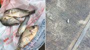 Pluie de poissons au Mexique: comment l'expliquer?