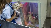 A Hong Kong, les toutous n'ont pas tous une vie de chien