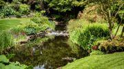 Bien gérer sa pièce d'eau au jardin durant l'été