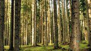 """Crowfunding: 230.000euros récoltés pour sauver la """"forêt des violons"""" en Italie"""