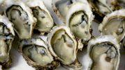 Et si les huîtres rendaient bientôt nos téléphones incassables?