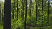 Découvrir Bruxelles autrement: la Forêt de Soignes, une perle verte au cœur de la ville