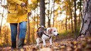 La marche et le ménage réduiraient les symptômes de sclérose en plaques