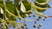 Recette de Candice: Succédané de café sur les graines