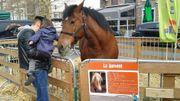 Ferme en ville  s'installe à Verviers