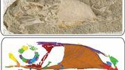 """Un fossile de """"toucan à dents de lapin"""" illustre la diversité des oiseaux contemporains des dinosaures"""