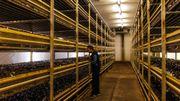Fluddasveppir, le seul producteur de champignons de l'île, utilise la géothermie à grande échelle pour produire 3 variétés de champignons à Flúdir et exploiter de nombreuses serres.