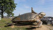 La tortue de Jan Fabre restera à la Citadelle de Namur grâce à l'appel à souscription