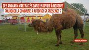 Nouveau cas de maltraitance animale dans un cirque à Ans ?