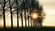 Les peupliers au soleil couchant