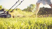 Au printemps, tondez votre pelouse en préservant la biodiversité