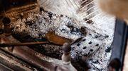 Conseil Intradel : comment recycler vos cendres de bois