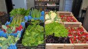 Remicourt: Des asperges et autres légumes bios