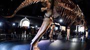 Une nouvelle espèce de dinosaure géant baptisée à New York