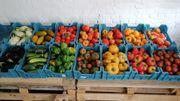 Rencontre avec Nicolas, un jeune producteur passionné de fruits et de légumes à la ferme d'Horruette à Horrues