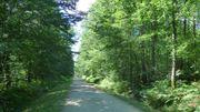 La forêt des Bertranges, un joyau naturel au cœur de la Bourgogne