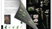 """""""Guide des plantes sauvages de Benelux"""""""