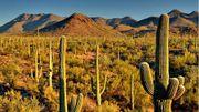 Comment le cactus survit-il dans le désert ?