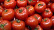 Mangez des tomates pour réparer vos poumons ?