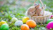 Que faire ce week-end : Sauver Pâques