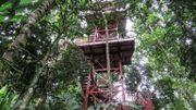 Le jardin botanique de Alberto Gomez à Quindio, le 6 juillet 2020.