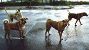 """Carine de Ellezelles : """"En Roumanie, c'est l'horreur pour les chiens errants... Il faut les sauver!"""""""