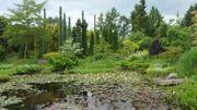 Au Pays-Bas, les étangs d'Ada Hofman